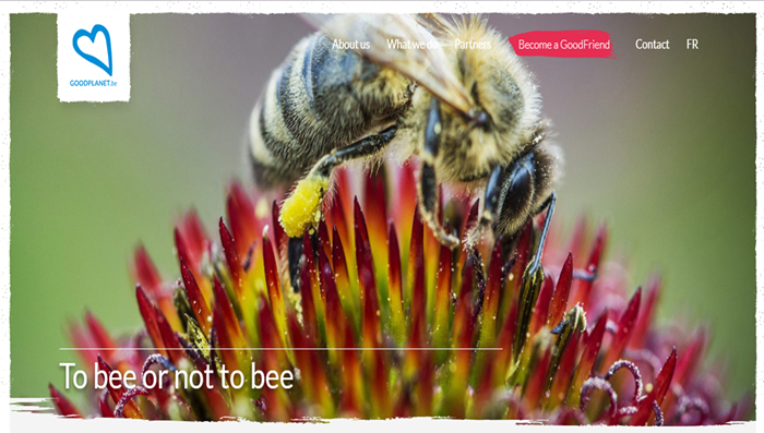 To bee or not to bee?
