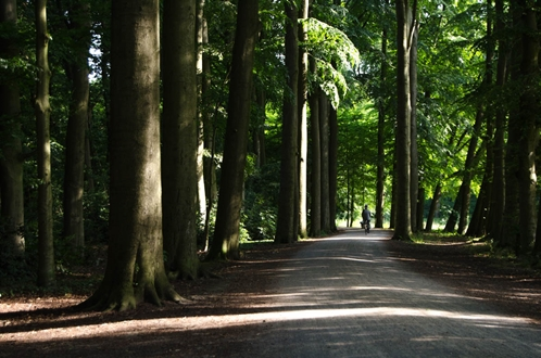 Netherlands - World Parks Week feature park: Abraham Ledeboerpark