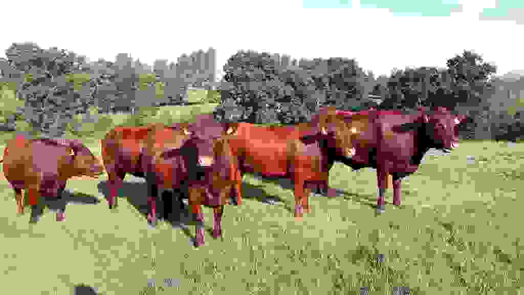 New cattle mooo-ve into Green Flag Award country park